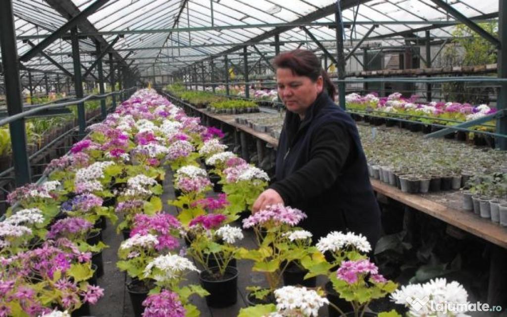 Personal sere de flori olanda