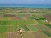 Arendez concesionez teren agricol Bio tulcea 1000 ha