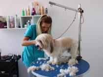 Curs de Coafor Canin Botosani