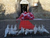 Închiriez Porumbei albi pentru nunți