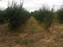 Fermă pomicolă Zamfira,60 ha cu irigare, utilaje, conac