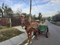 Cal cu tot cu căruță