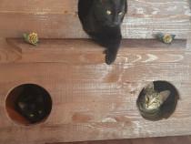 Căsuță de exterior pentru animale.