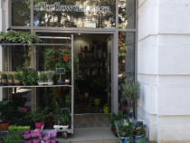 Angajam lucrator comercial magazin plante-flori-decoratiuni