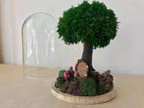 """Cupola de sticla ,,Casuta din copac""""."""