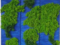 Tablou licheni stabilizati cu harta lumii din 3 piese