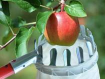 Culegator fara coada, panza si aluminiu pentru cules fructe