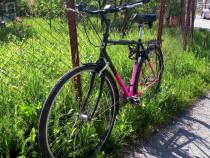 Bicicleta PEGASUS 26' - import Germania