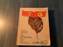 Cele douasprezece luni ale visului Iordan Chimet carte copii
