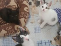 Pisoiași pentru adopție