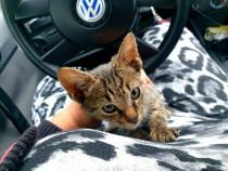 Pui pisica adoptie!