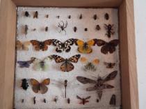 Insectar /insecte deosebit
