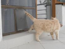 Montaj Usa acces trecere Pisica in plasa de tantari