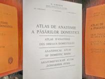 Atlas Anatomie Pasari Domestice 1976.