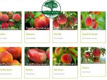 Pomi Fructiferi (Transport gratuit in Bihor)