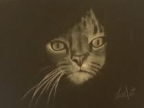 Desen Pisicuta