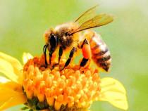 Familie de albine si roiuri 2019