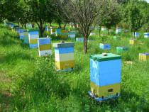 Familii albine pe rama 3/4 cu 2 corpuri