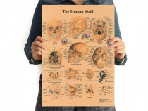 Poster vintage Craniu Uman hartie kraft dimensiune 42 x 29