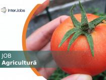 Personal agricultură (sere) - Olanda