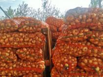 Ceapă din arpagic proaspăt recoltata