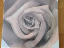 Tablou sigilat Trandafir print pe panza 40 cm