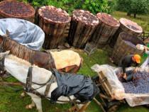 Tuica  de prune  - 100 % Naturala - Traditionala Apuseni