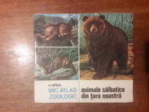 Mic atlas zoologic - N. Saftoiu 1976 / R6P2F