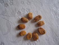 Fructe/seminte/rasad de castravete amar- momordica charantia