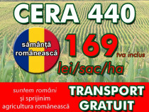 Samanta porumb Procera CERA 440 (FAO 440)