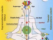 Cursuri de Sahaja Yoga in Focsani