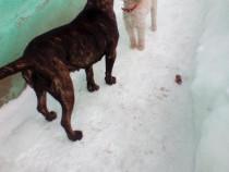 Pensiune canina Cazare canina Cazare pentru caini Giurgiu