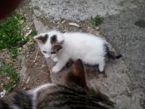 Adoptie pisicuta
