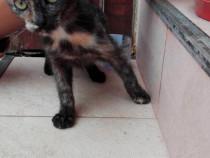Pisicuta spre adoptie