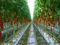 Muncitori agricultura-Locuri de munca in Olanda