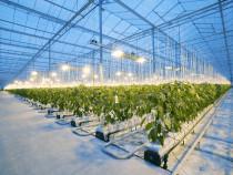 Muncitori agricultura in Olanda