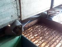 Stupi cu familii albine