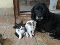 Pisicuta sanatoasa spre adoptie