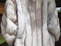 Haina vulpe polara argintie