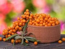 Cătină bio și produse derivate