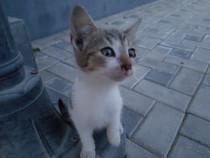 Donam pisicute
