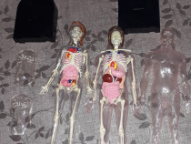 Corpul uman cu sau fara reviste