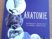 Medicina anatomie aparatul digestiv g lupu