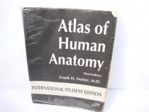 Atlas de anatomie umana / Atlas of Human Anatomy (F. Netter)