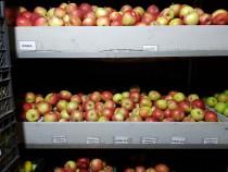 Mere bio diferite soiuri, din livadă proprie și suc de mere