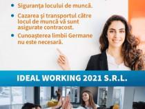 Muncitori industria alimentara Ideal Working S.R.L!