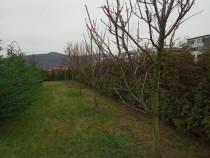 Taieri pomi fructiferi , vie , toaletări arbori