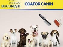 Cursuri Cosmetică Canina