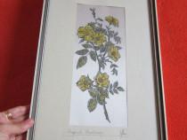Tablou vintage,flori, botanical,semnat,made Germany'60-cadou