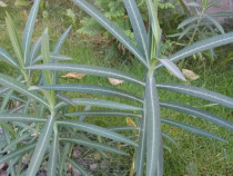 Planta impotriva cartitelor